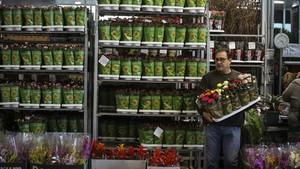 Un distribuidor de rosas de Mercabarna, desde donde se comercializa un tercio de las flores que se venden en Sant Jordi, este jueves.
