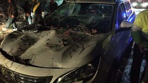 Rescatats il·lesos una dona i tres nens després de caure'ls un pi a sobre del cotxe