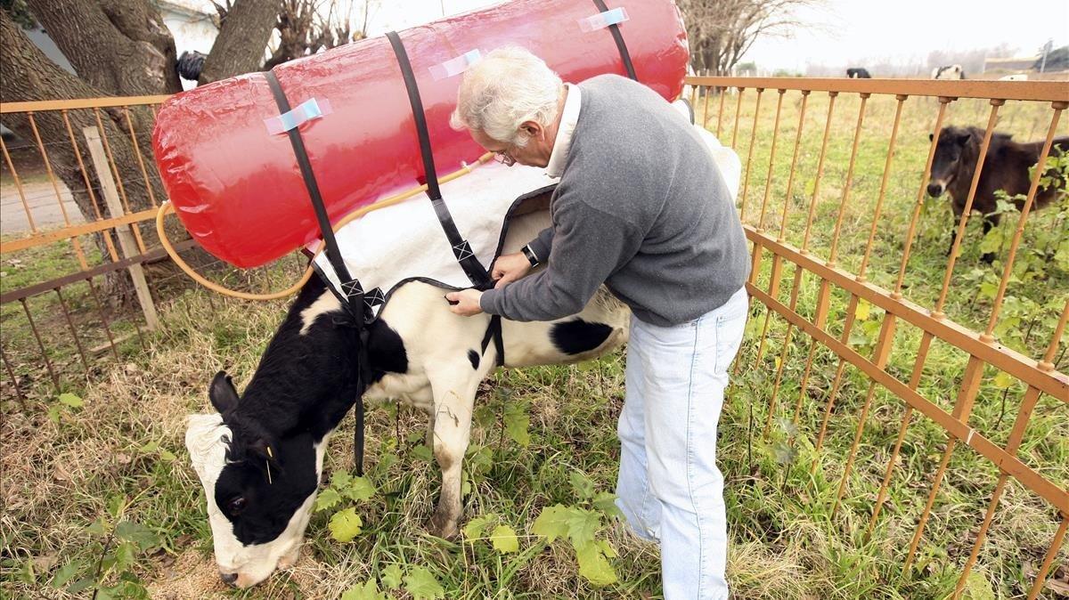 Guillermo Berra, el autor del proyecto de las 'vacas mochileras', ajusta el mecanismo.