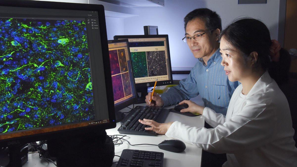 Chun-Li Zhang y Lei-Lei Wang, responsables del hallazgo