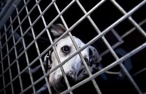 zentauroepp20972304 barcelona 2012 12 05 barcelona perros y cuidado161214182150