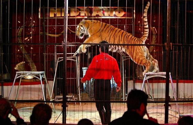 Espectáculo de circo con tigres, en el 2006, en Esplugues de Llobregat.