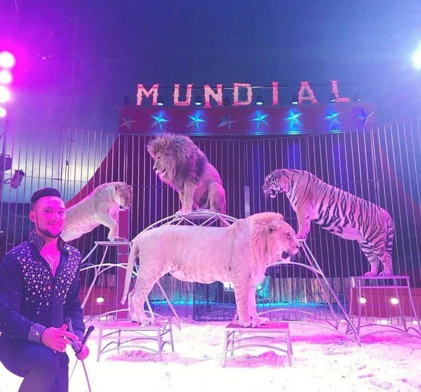 Un espectáculo con tigres y leones del Gran Circo Quirós.