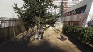 """El mejor pipicán de Barcelona: """"Un remanso de paz y las mejores cacas"""""""