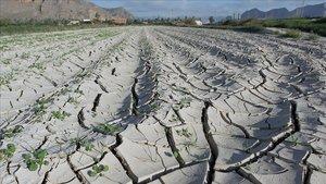 Vista general de campos de la huerta de Orihuela afectados por la sequía.