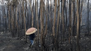 zentauroepp40564314 a villager checks a burnt area under the rain in soutomaior 171017142732