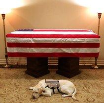 El perro de George Bush padre, frente al ataúd de su dueño