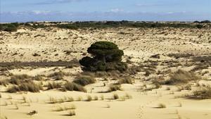 El Govern declara la 'sobreexplotació' de tres masses d'aigua de Doñana
