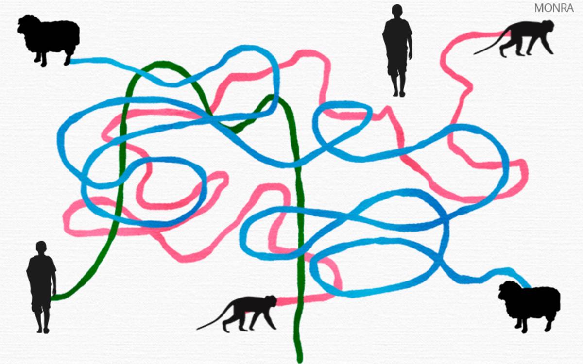 La clonación de macacos es una noticia de interés discutible