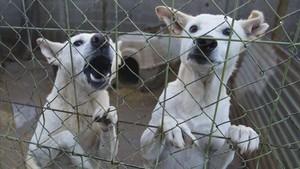 Dos perros a la espera de ser adoptados en una protectora de Lleida.