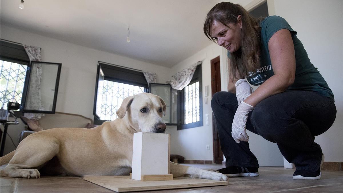 Íngrid Ramon y su perro Blat,adiestrado para detectar si un paciente está enfermo de cáncer de pulmón, olfateando unas muestras de aliento.
