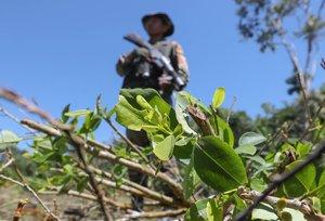 El Gobierno de Colombia busca seguir enfrentando a los grupos armados ilegales y carteles que manejan los cultivos industriales de coca.