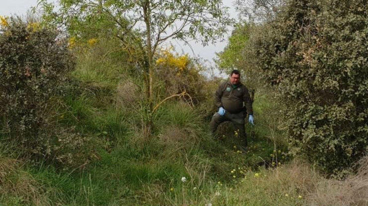 Agente rural delimitando la zona en donde se encontró al perro