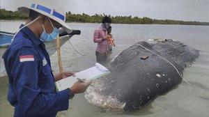 El cachalote muerto con 6 kilos de plástico en el estómago.