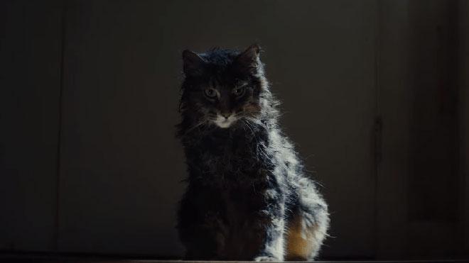 Estrenos de la semana. Tráiler de 'Cementerio de animales' (2019)