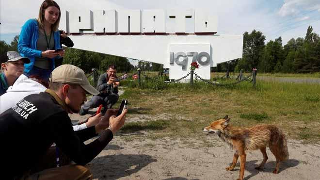 El éxito de series sobre Chernóbil o Alcàsser impulsa el llamado turismo oscuro. En la foto, turistas fotografían un zorro en el pueblo fantasma de Pripyat, cerca de Chernobyl.