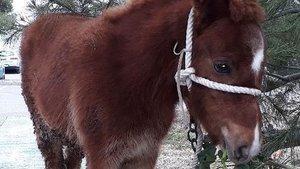 Una imagen del poni abandonado en Lorca.