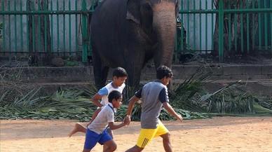 Uns nens juguen a futbol a Colombo davant un elefant de Sri Lanka.