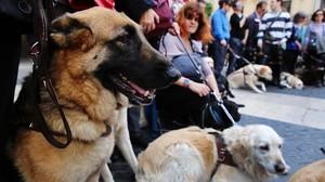 Perros guía en la plaza de Sant Jaume de Barcelona.