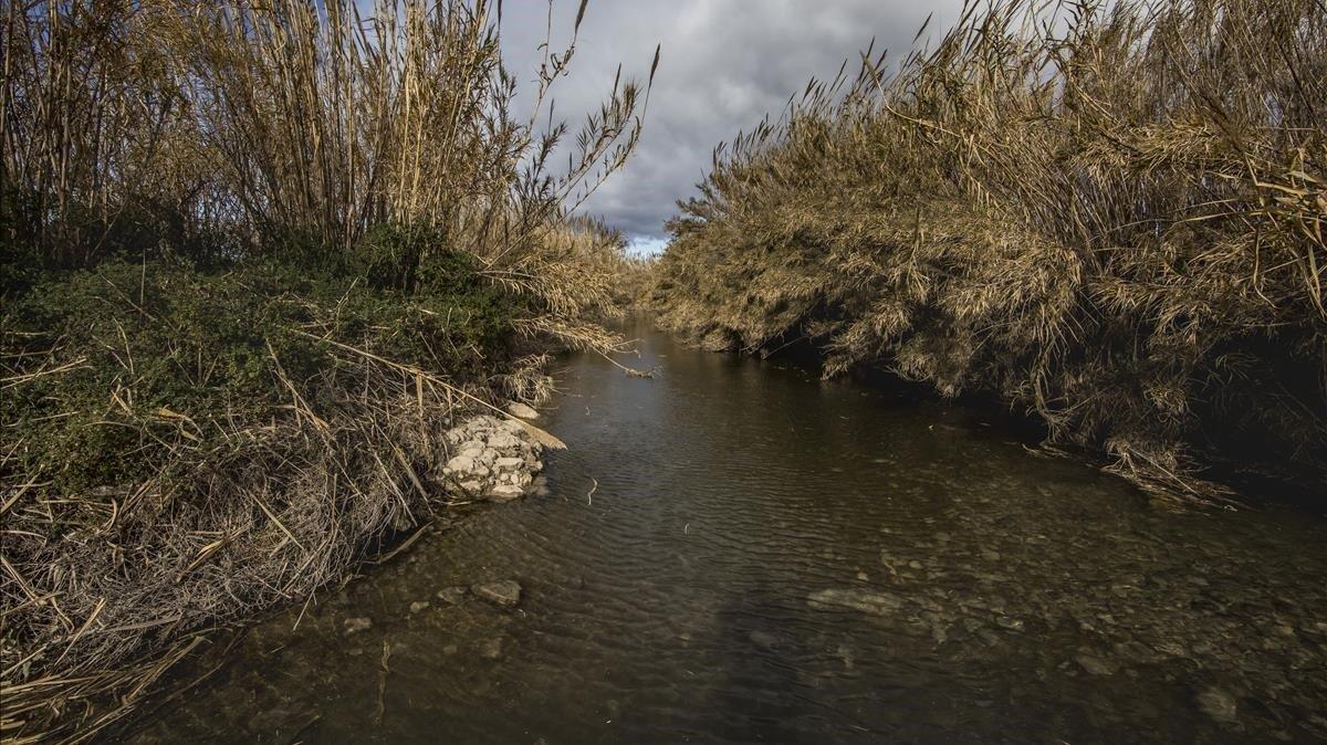 Paraje del rio Turia cerca deValència donde se han hallado rastros de nutrias.