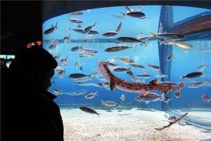 """""""El acuario de Barcelona es muy artificial. No hay plástico en el agua"""""""
