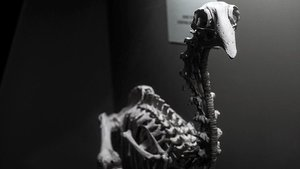 Los antepasados de una misteriosa ave gigante neozelandesa, la extinta aptornis, llegaron volando al paÍs oceÁnico desde la isla de Madagascar y África continental hace mas de 19 millones de años.
