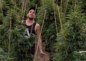 L'Iván Lerman, empresari marihuaner: «El consumidor ocasional demana marihuana forta»