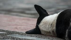 Un perro yace en el suelo.