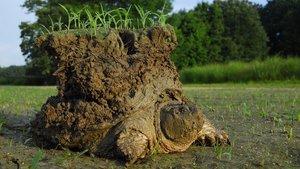 La famosa tortuga con el mundo a sus espaldas