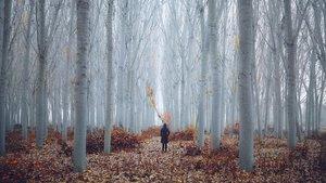 'Realitats imaginàries'. Aida Pascual aporta esta boscosa fotografía a la muestra colectiva de la galería Fifty Dots.