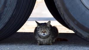 Un gato, en una foto de archivo.