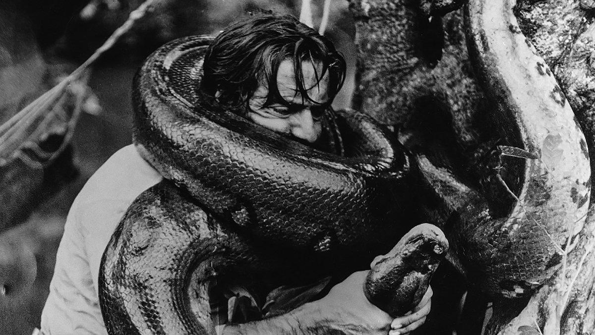 Miguel de la Quadra-Salcedo, cuerpo a cuerpo con una anaconda, en el Amazonas.