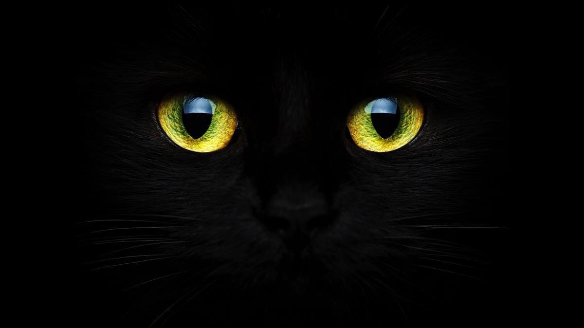 Primer plano de los ojos de ungato negro