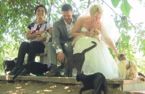 Dominic Husson y Louise Veronneau, junto a la dueña del refugio, Lynea Lattanzio, y algunos gatos.