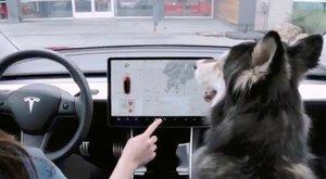 Tesla activa el 'mode gos' perquè puguis deixar la teva mascota al cotxe sense risc per a la seva salut