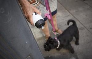 Mataro sancionara a los usuarios que no limpien los orines de sus mascotas