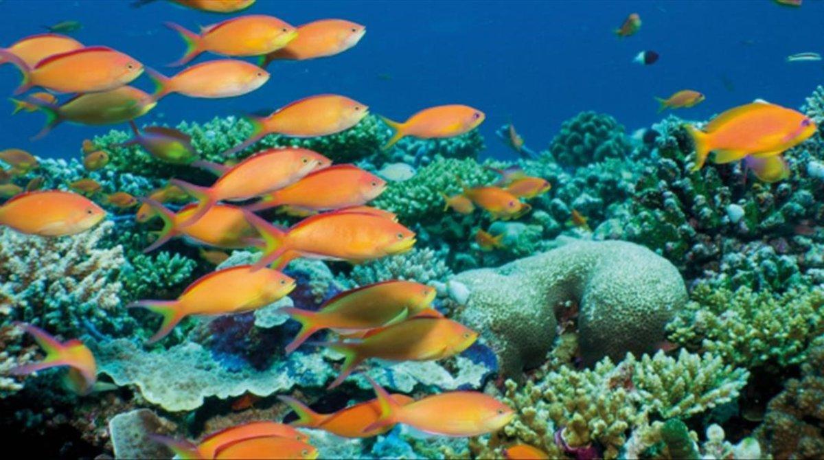 Biotherm celebra el Día Mundial de los Océanos.