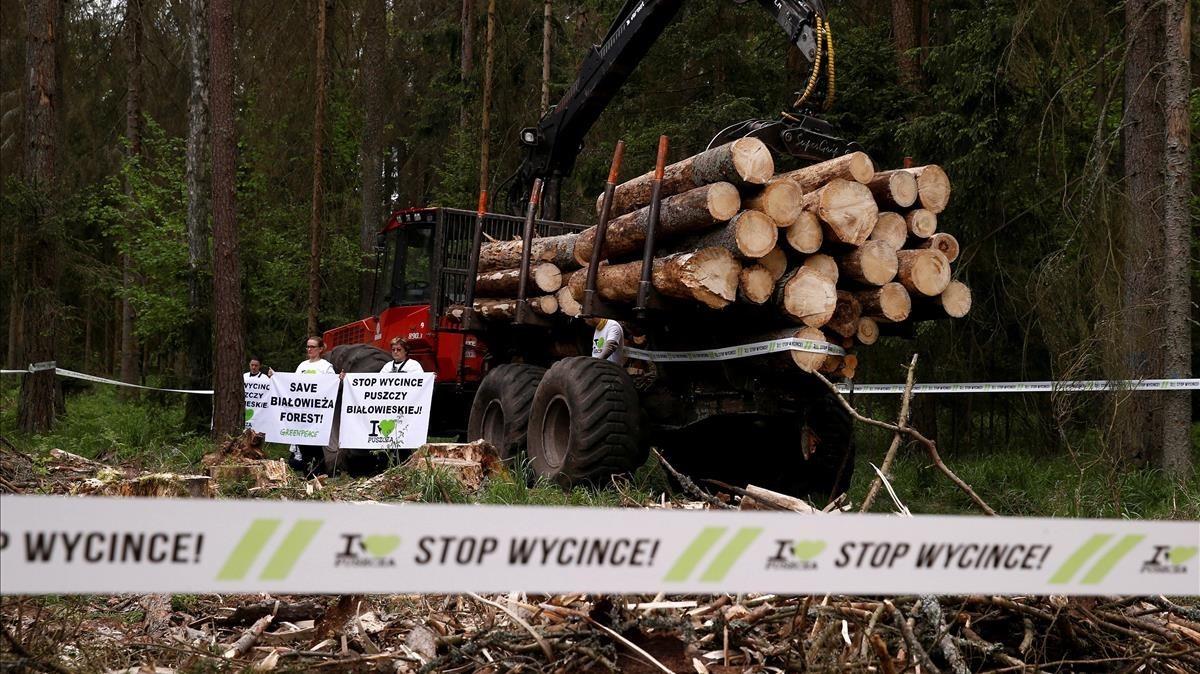 Activistas del medio ambiente protestan frente a una pila de troncos de árboles talados en el bosque de Bialowieza.