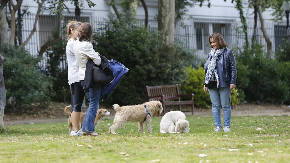 Cornellà repartirá botellas de agua a los propietarios de perros para que rieguen los orines
