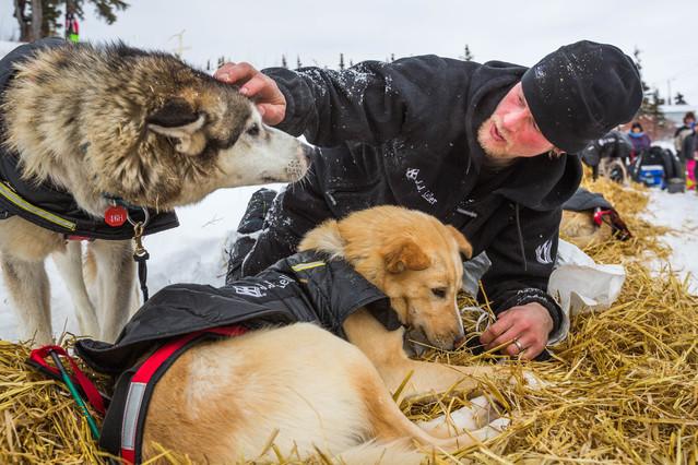 Un hombre cuida de sus mascotas, este lunes en Koyuk (Alaska).