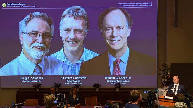El Nobel de Medicina 2019 premia els descobridors de com les cèl·lules s'adapten als nivells d'oxigen