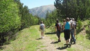 Un paseo en el bosque de Virós, territorio del Parc Natural del Alt Pirineu, en el municipio de Alins de Vallferrera,comarca del Pallars Sobirà.