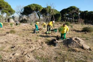 Viladecans planta 150 pins per ajudar a renaturalitzar la Pineda del Remolar.