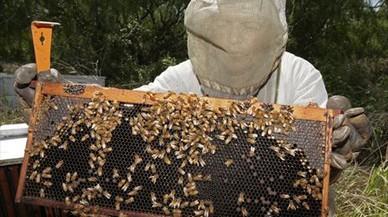 La UE prohíbe tres insecticidas peligrosos para las abejas
