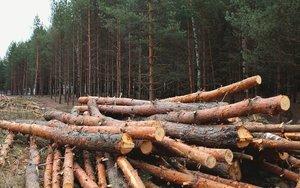 Tala de árboles en los bosques de Panamá.