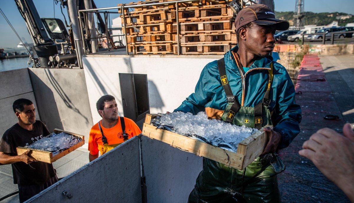 Unos pescadores desembarcan las capturas tras una noche de pesca, en la cofradía de pescadores de Barcelona.