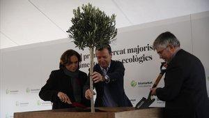 La alcaldesa de Barcelona, Ada Colau,el director general de Mercabarna, Josep Tejedo, y el presidente de la entidad y concejal, Agustí Colom,plantan un olivo para inaugurar las obras del futuro mercado bio.