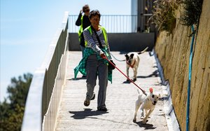Voluntarios paseando perros este lunes en el Centre d'Acollida d'Animals de Companyia de Barcelona, situado en la Carretera de l'Arrabassada.