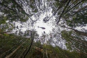 Un helicóptero participa en la protección de los incendios del bosque prehistórico de Australia