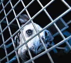 Un gos a la gossera municipal de Barcelona, al desembre.